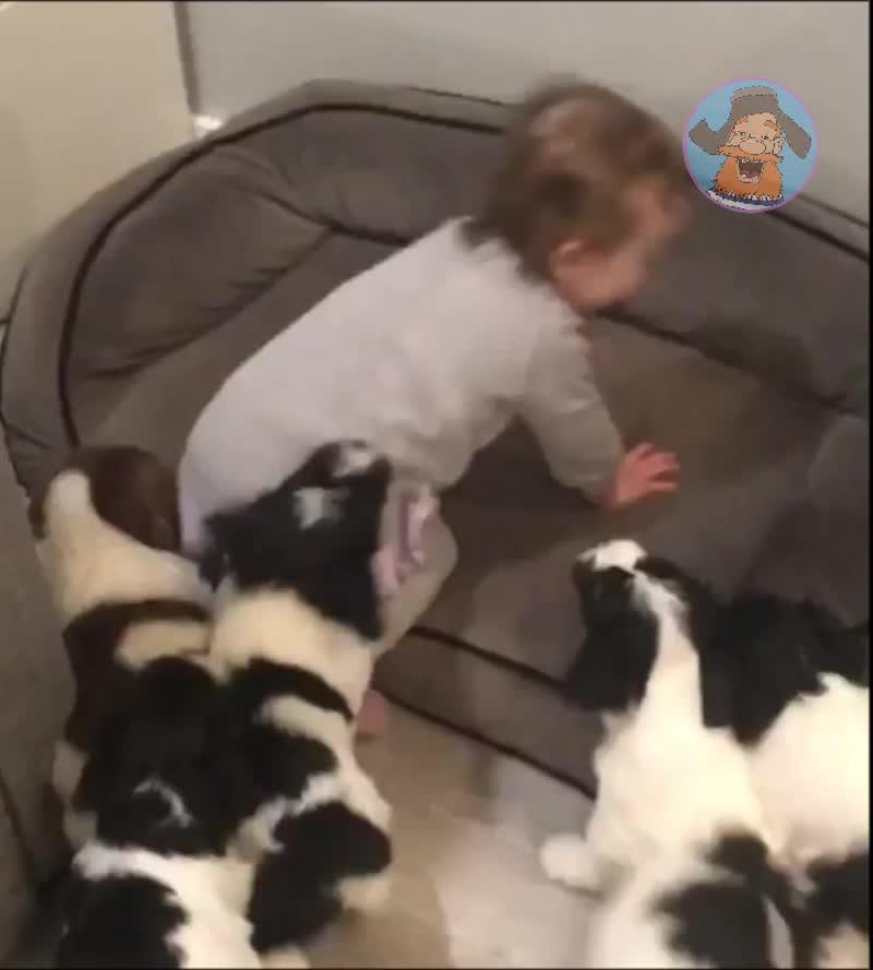 Свирепое нападение стаи собак на ребёнка