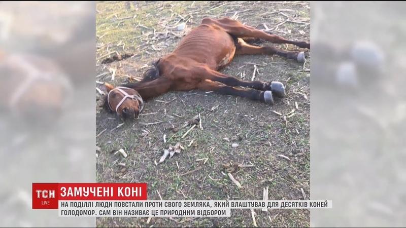 Жителі Кам'янця-Подільського повстали проти земляка, який морить голодом десятки своїх коней