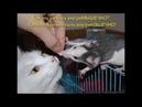 Веселые картинки. Приколы про кошек самые смешные. Кошки-мышки.